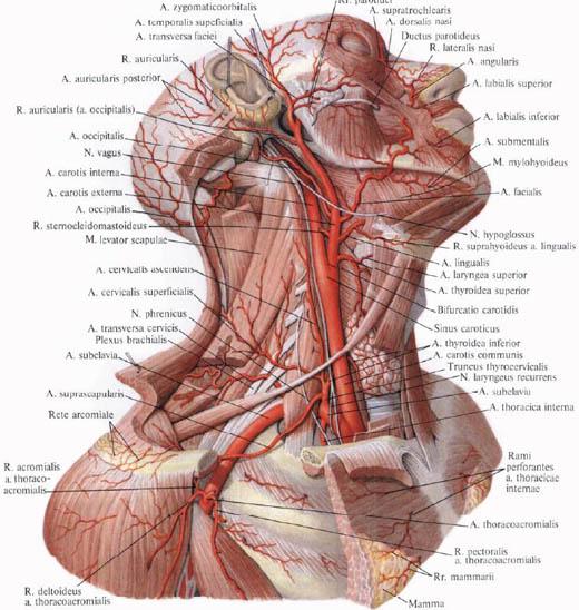 magas vérnyomás esetén mekkora a nyomás reggel érvek és tények a magas vérnyomásról