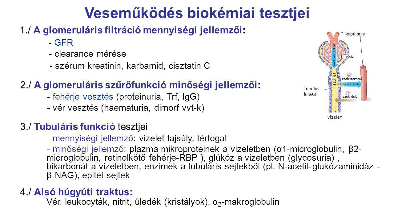 vizelet kreatinin értéke)