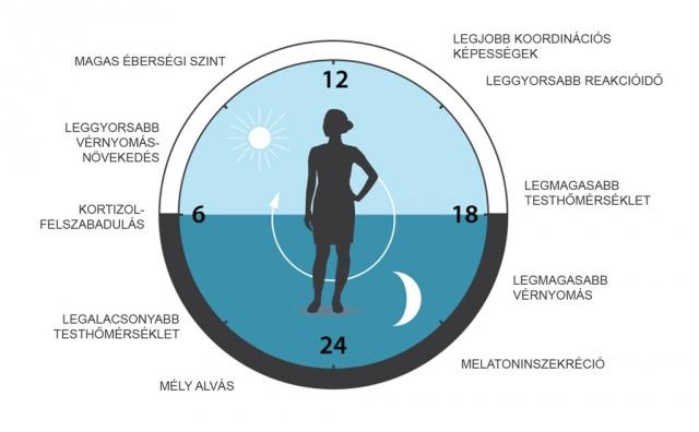 cirkadián ritmusok és magas vérnyomás pontok a magas vérnyomás ellen