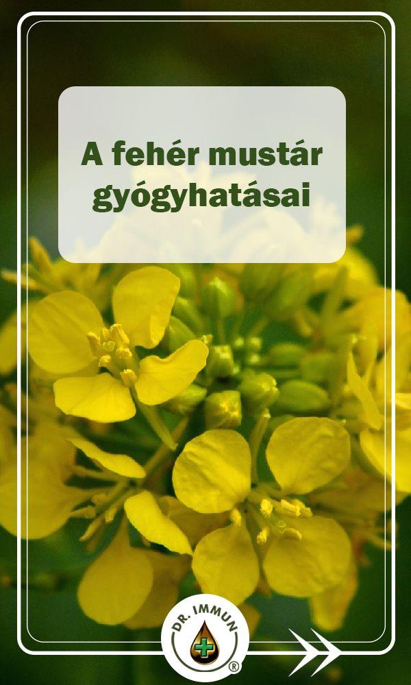 mustár és magas vérnyomás