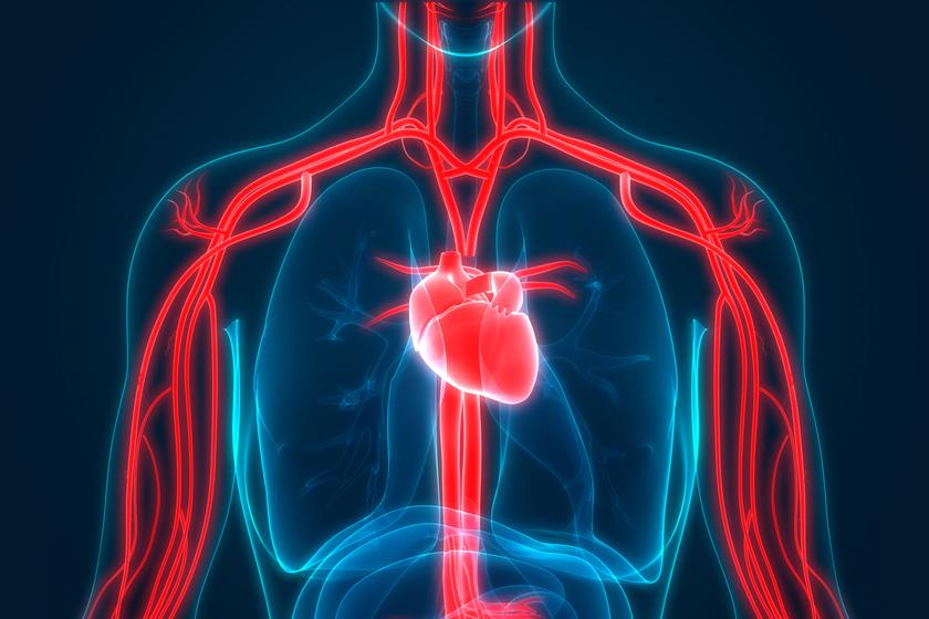 magas vérnyomású agyi erek 1 fokos magas vérnyomás 25 évesen