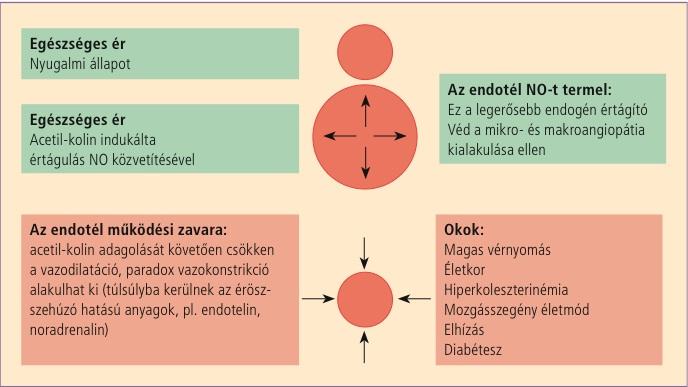 magas vérnyomás és hypothyreosis a magas vérnyomás ortodox kezelése